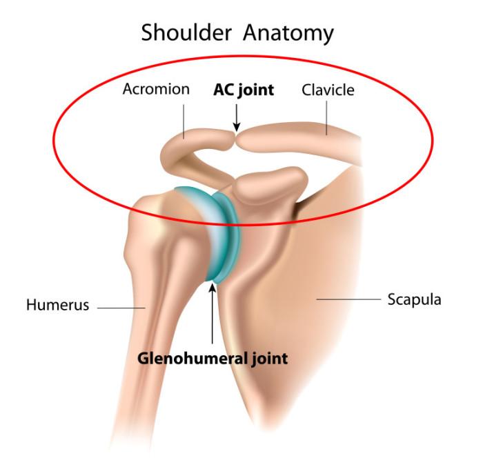 shoulderjoint